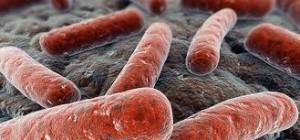pasozyty2